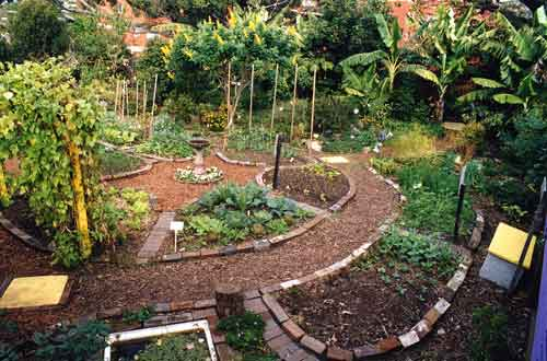 what is permaculture ecoliving design