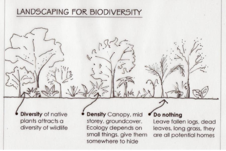 landscaping for biodiversity