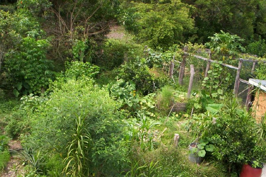 Permaculture on 2 acres ecoliving design for Permaculture garden designs