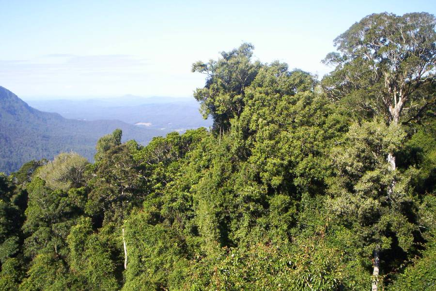 ocean facing forested ridges are critical to water catchment health