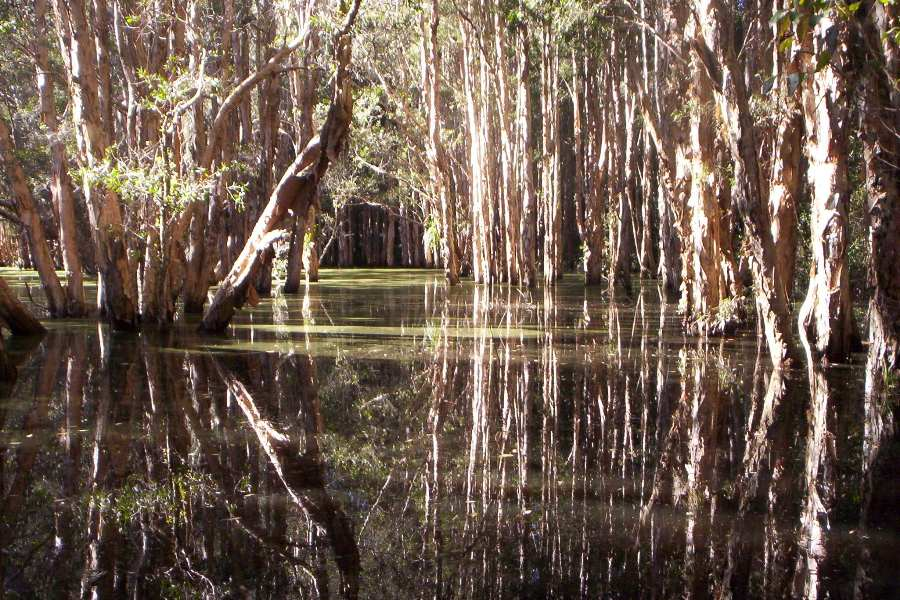 forested wetlands are the great filtered sinks of the landscape