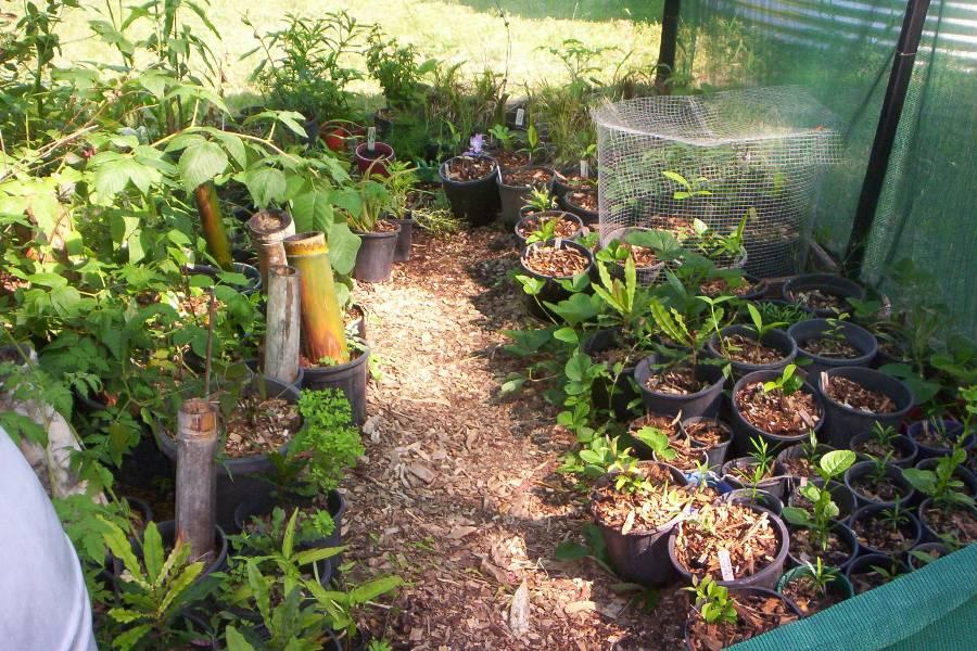 (9) nursery floor used to grow strawberry & greens